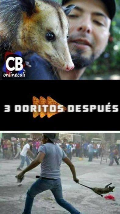 Tlacuache Meme