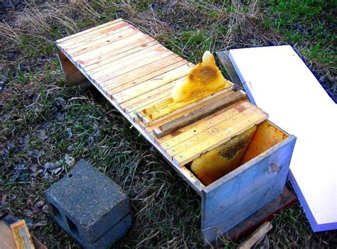 Top Bar Beehive by Bush Bees Foundationless Frames Top Bar Hive Hives