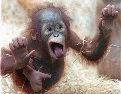 cute funny animalz funny monkey  pictures