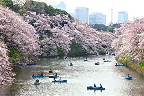 best things to see in tokyo tokyo guide 10 things to see in tokyo japan