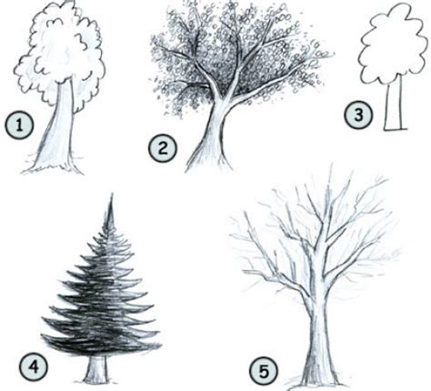 easy tree to draw how to draw a tree drawing
