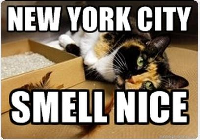 Meme New York - new york city cat meme cat planet cat planet