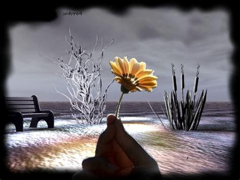 donare un fiore neve su dolce eternity