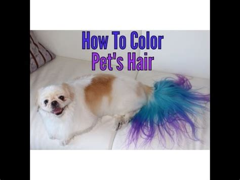 how to get dog hair off comforter how to color dye your dog youtube