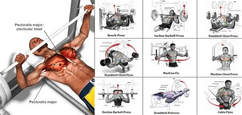 a sle chest workout routine all bodybuilding