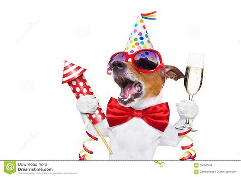 new year animal birthday happy birthday stock photo image of advent luck