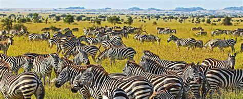 Professional Floor Plan tanzania safari tours