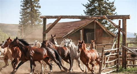 Rancher Home by Our Ranch Offers Trail Riding On Responsive Horses