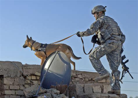army handler defense gov photos news photo