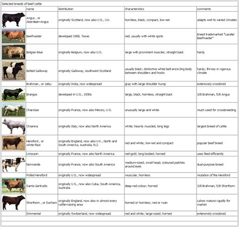 cattle names on the homestead cattle on cattle beef cattle and dairy