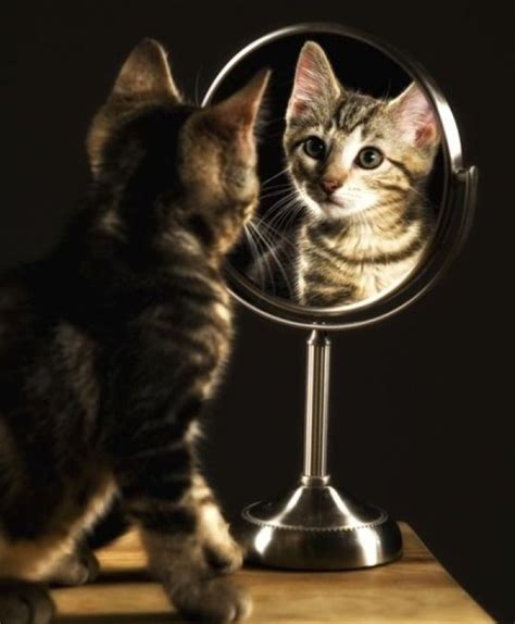 Cat Mirror extremely kitten 2nd february 2015