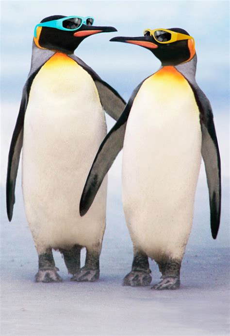 cool couple  penguins  sunglasses anniversary card greeting cards hallmark