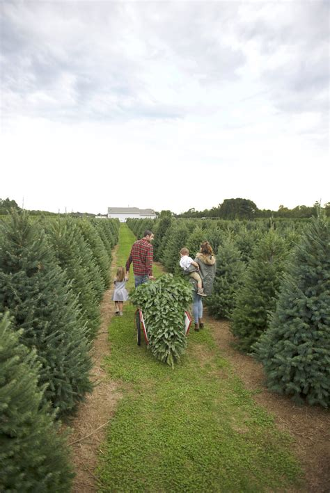5 places to cut your own christmas trees and where to eat