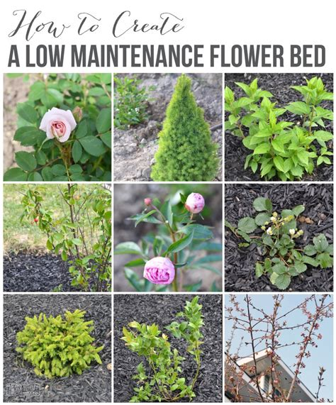 create   maintenance flower bed  front yard