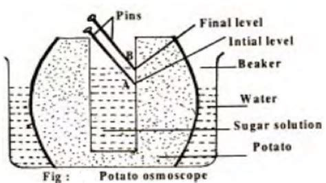 Diffrent Types Of Mba Concentrations by Demonstration Of Osmosis Potato Osmoscope Study