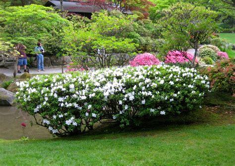 giardino con fiori siepi con fiori siepi siepi con fiori caratteristiche
