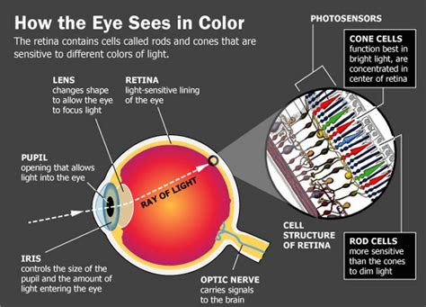 what part of the eye has color what if my colors are different from your colors