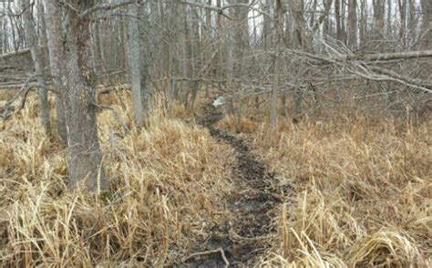 how to find deer bedding areas deer bedding area tactics whitetail habitat solutions