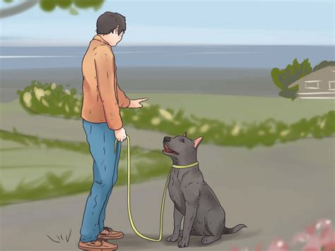 how to your puppy to walk on a leash how to teach your to walk on a leash 12 steps with pictures
