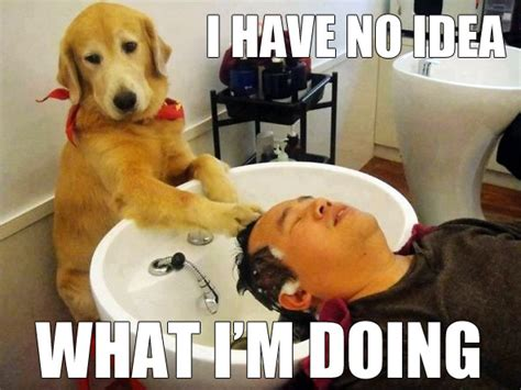 No Idea Meme - image 305236 i have no idea what i m doing know