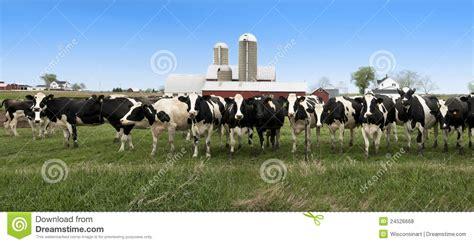 La Grange Des Pères Prix drapeau panoramique de panorama de vaches laiti 232 res du