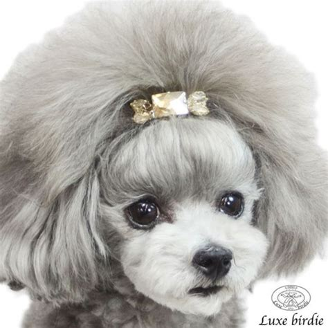 pictures of diffrent poodle grooming styles 30 different dog grooming styles tail and fur