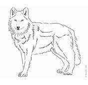 Gallery Wolf Drawings In Pencil Easy  Art
