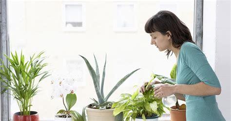 membuat hidroponik untuk pemula cara membuat tanaman hidroponik di rumah untuk pemula