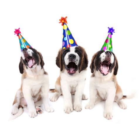 birthday puppies singing bernard puppies with birthday hats food store