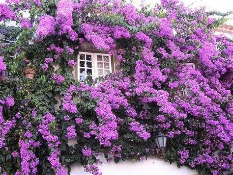imagenes de flores bonitas para descargar gratis fondos de pantalla bonitos para whatsapp