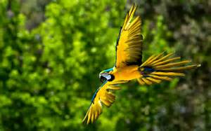 wallpaper of birds wallpapers macaw bird wallpapers