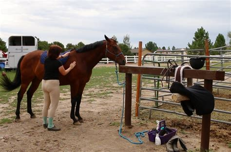 Horse Tack Giveaway 2017 - 31 days to being a better rider day 6 tacking up faster budget equestrian
