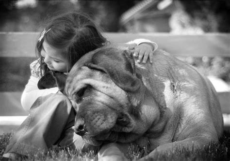 dogs and humans touching photos of dogs with humans designbeep