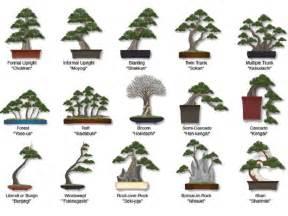 tree types the 25 best ideas about bonsai tree types on pinterest