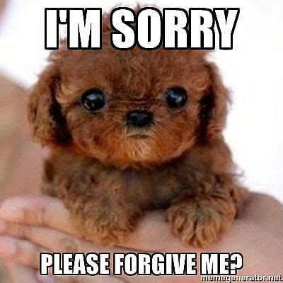 sorry puppy i m sorry forgive me puppy image punjabigraphics