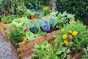 home vegetable garden tips for starting a home vegetable garden eco talk