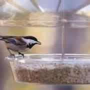 wild birds unlimited pet stores austin tx yelp