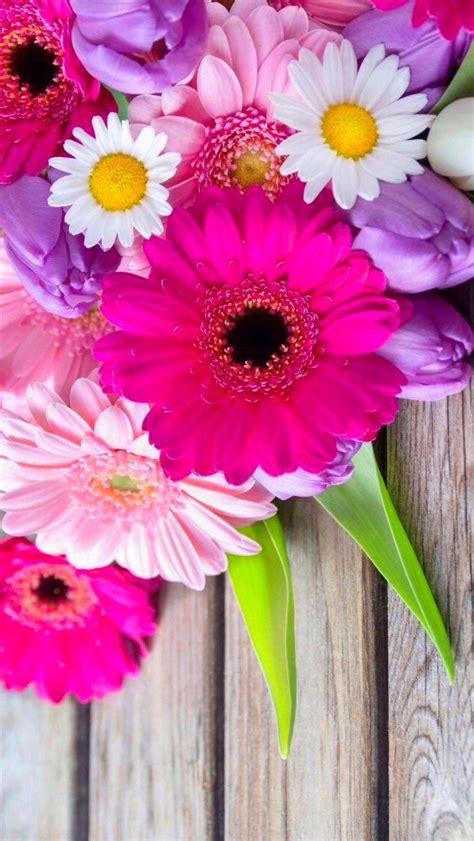imagenes flores gerberas m 225 s de 1000 im 225 genes sobre fondos de pantalla en pinterest
