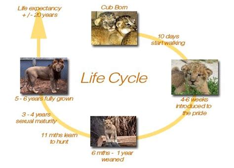 cycle of a cat diagram 848 best images about science cycles on