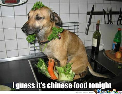 Dog Food Meme - chinese food memes best collection of funny chinese food