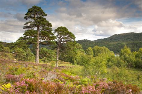 Trees For The Charity Thats Restoring The Caledonian Forest by An Urbanite Goes Rewilding What To Expect From A