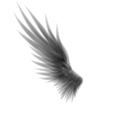 wings i wing by cinnamonkitt on deviantart