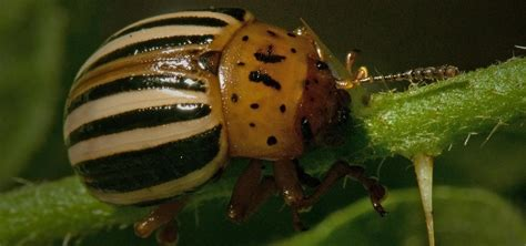 getting rid of garden pests how to get rid of plant pests using 100