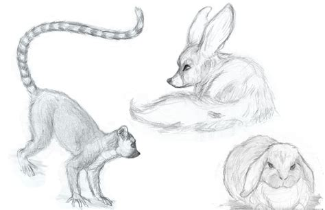 Drawings Of Animals by Animal Drawings May 2010