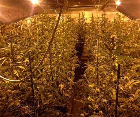 cultivo interior como cultivar marihuana en invierno blog cultivo marihuana