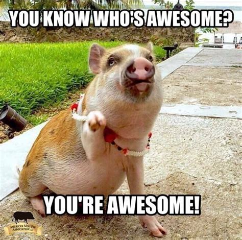 20 you are awesome memes 20 pig memes that will surely your