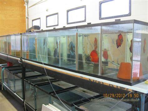 room fish discus fish room discus fishroom development part 2
