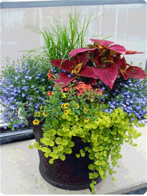 Flower Pot Containers Gardening Inspiration On Container Garden