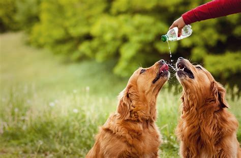 signs of dehydration in dogs signs of dehydration in your pet what you need to banning veterinary hospital