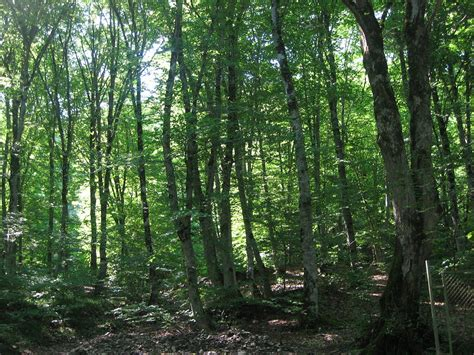 The Of The Forest forests of azerbaijan